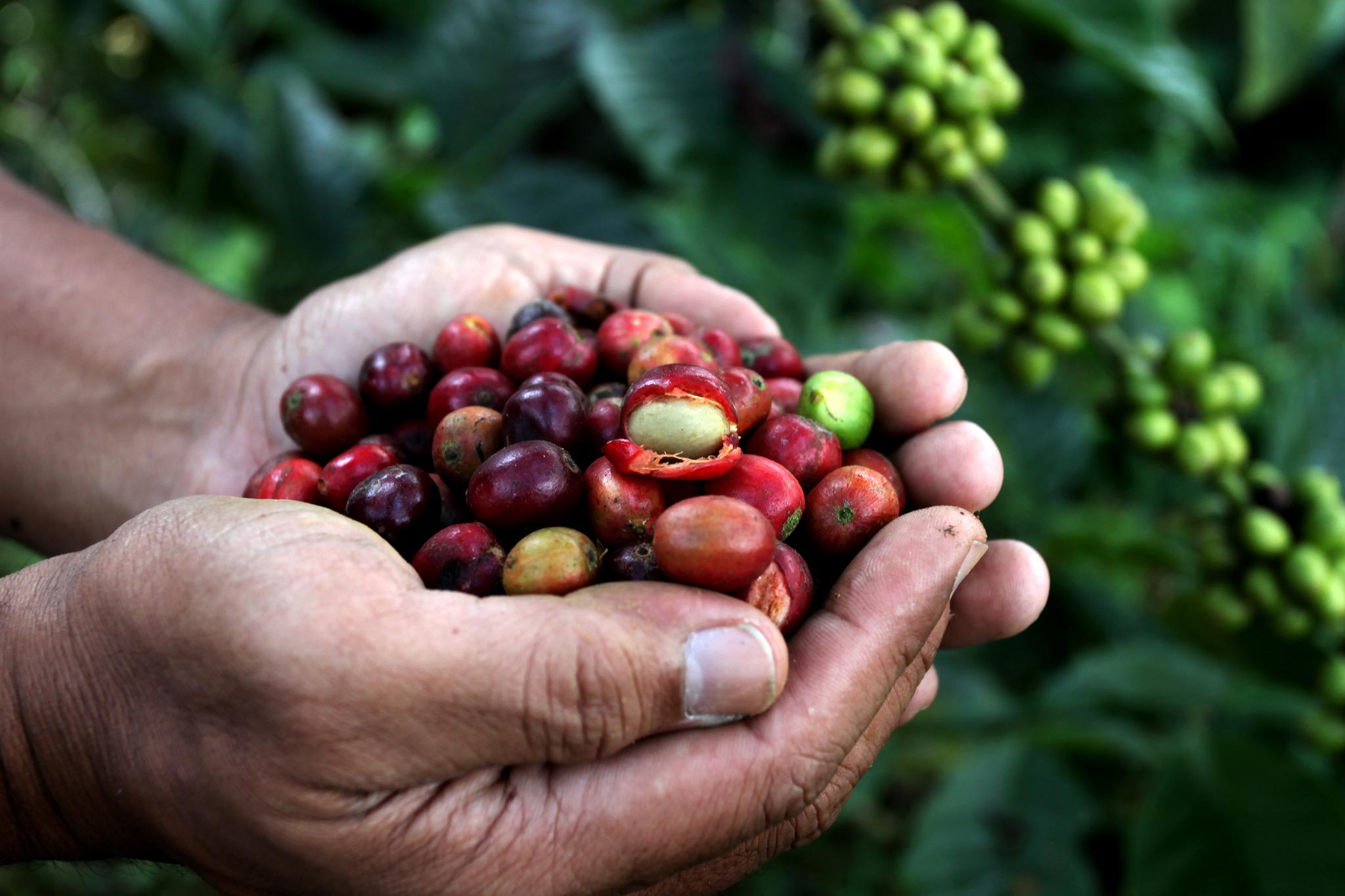 caffè equosolidale